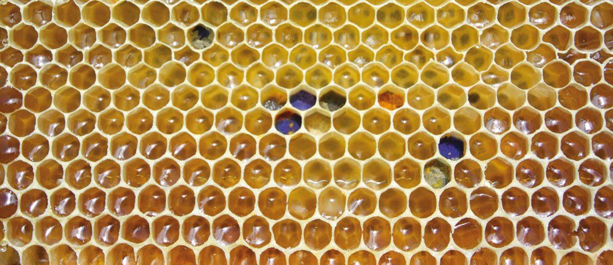 ¿Por qué la cera de abejas no es un emulsionante?
