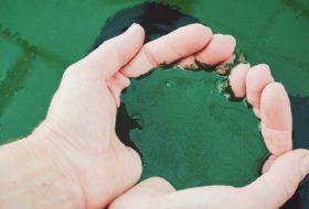 Materias primas: algas en cosmética natural
