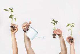 Sostenibilidad en cosmética natural – Parte I