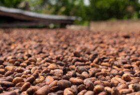 Manteca de cacao: origen, propiedades cosméticas y formulación
