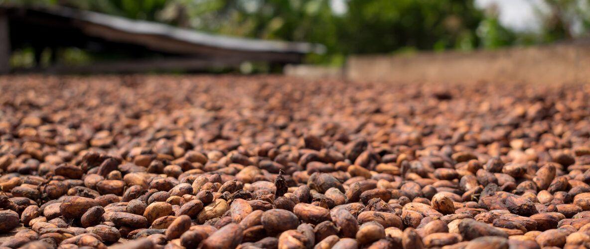 portada_manteca cacao