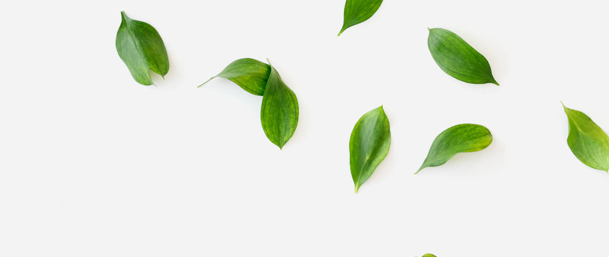 Fitocosmética natural: ¿qué hay detrás?