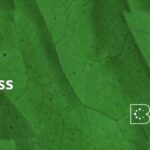III Green Beauty Congress: evento online sobre cosmética natural